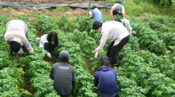 新入社員農業研修