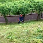 村内施設の草刈