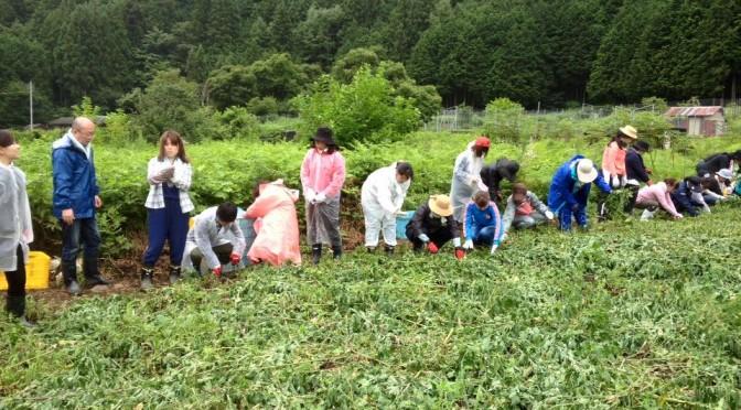 農業研修ジャガイモ手掘り大会
